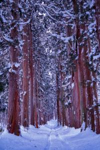 戸隠神社奥社への杉並木